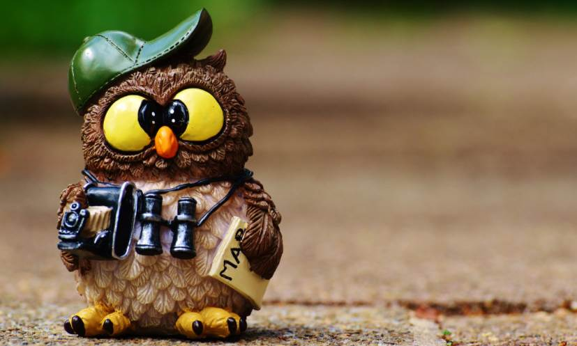 Image of a Toy Tourist Owl