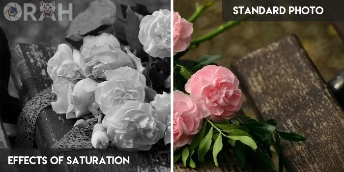 Effects of Saturation vs Standard Photo
