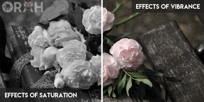 Effects of Saturation vs Vibrance Effect