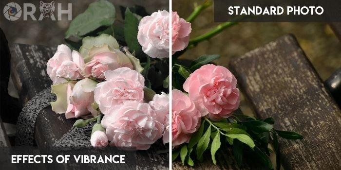 Effects of Vibrance vs Standard Photo
