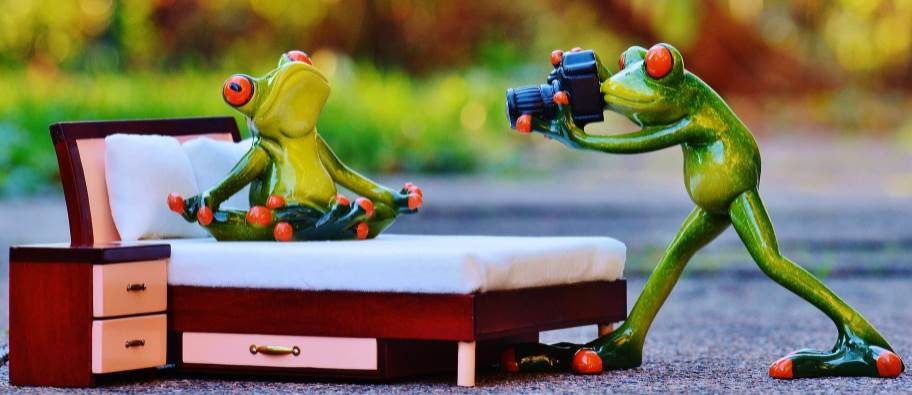 Image of two toy frogs
