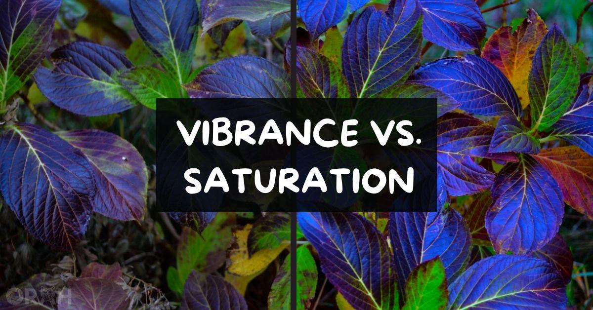 Vibrance vs Saturation