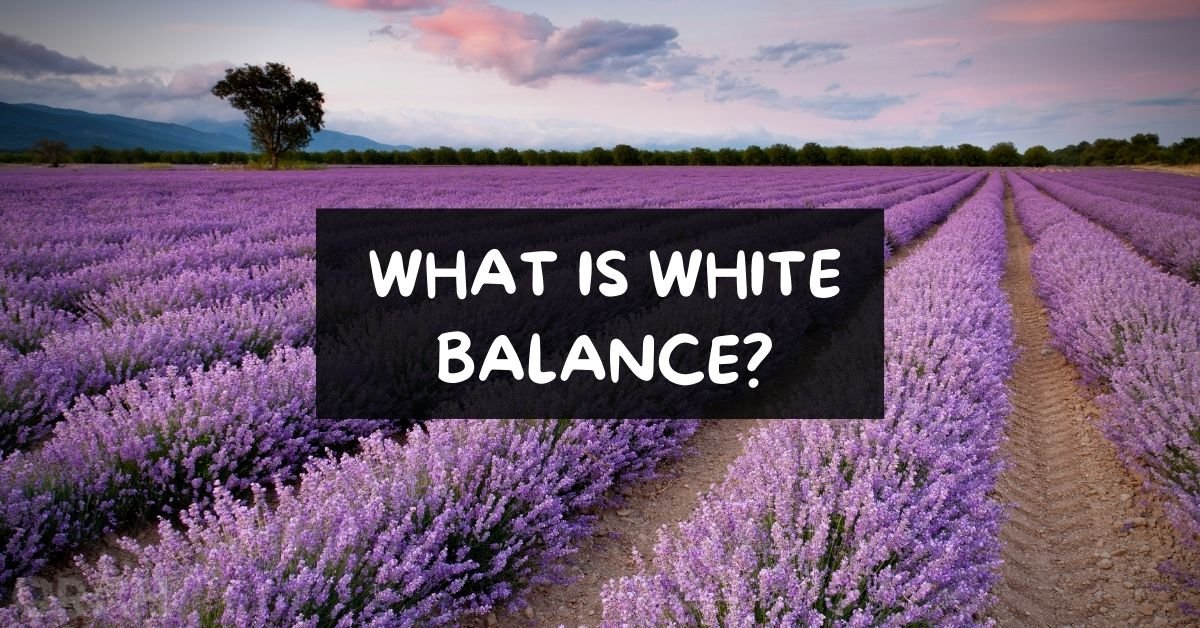 What Is White Balance
